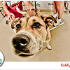 Pet-A-Palooza-058