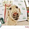Pet-A-Palooza-052
