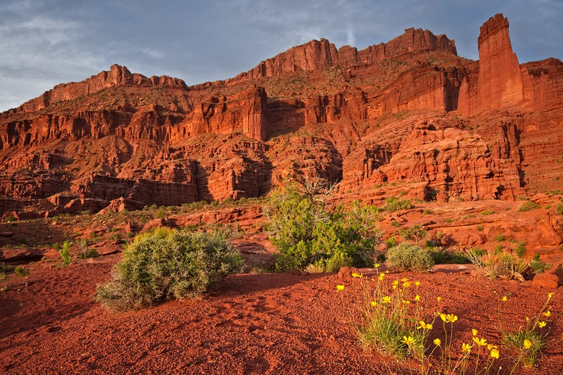 Fisher Towers Sunset Flowers