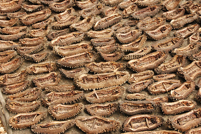 Kupang - drying tripang (sea cucumber)