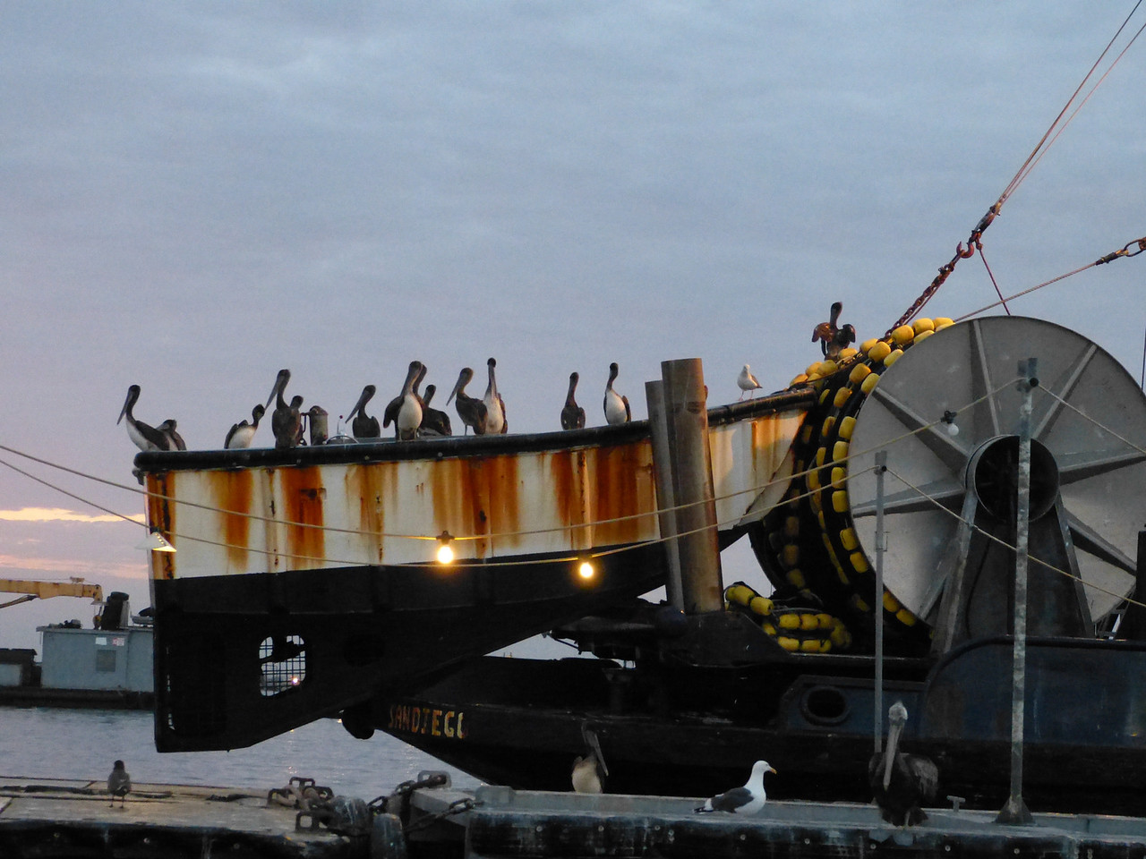 sea vultures