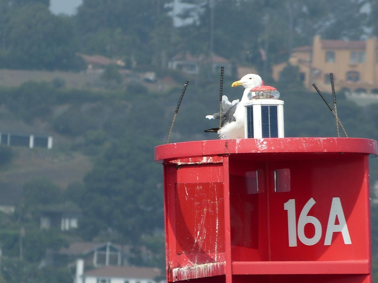 Ever vigilant atop buoy 16A