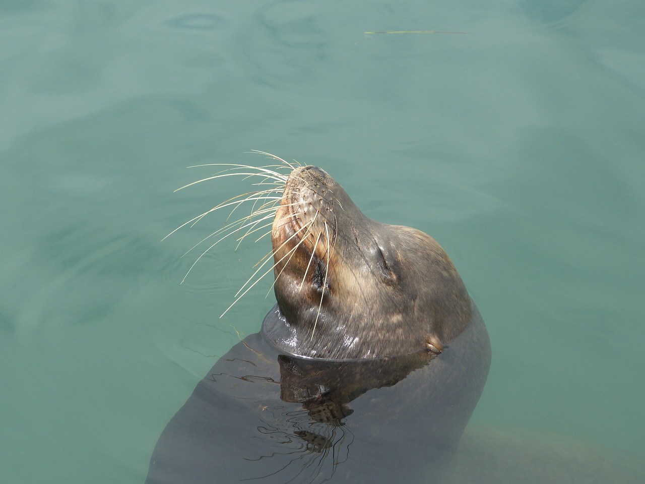 I can tell he's awake, sniffin' for more fish -- see how his whiskers are forward!
