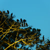 Here it it close up -- crow headquarters!  Looks like some cormorants, too.
