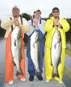 10/21/2005  I fished with Gary Arnold and his customers Andy and Bob.  We had a great time fishing for striped bass with live bait.  We boated about 8 bass up to 32 pounds and all were good fish well over 20 pounds.  We dropped a few others and had lots of action.  We had a little rain but no wind and that made it comfortable.  The food was great as Bob Manheimer brought his usual ton of specialty food from a top notch Italian Deli.  We piged out on food and bass.  It was fun and another excellent day of fishing the Fire Island area.  Captain Al Lorenzetti