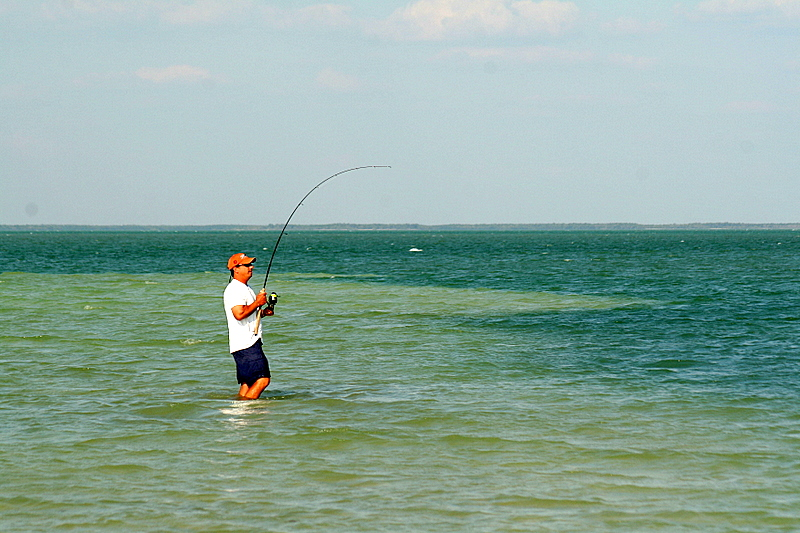 This is Wes fighting a big snook.