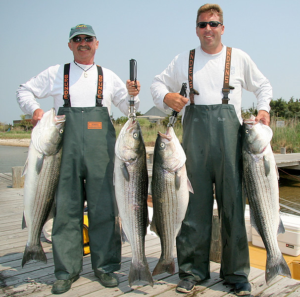 Here we have Pete and Bobby left to right with their keepers for the day.<br /> <br /> We boated 12 fish all between 21 and 29 pounds and had lots of other run-offs and action.<br /> <br /> Pete's wife bought him the charter for his birthday.  Another happy birthday boy.<br /> <br /> Another great day on the water with great guys.<br /> <br /> P.S. Some really big fish showed up today around Fire Island.  I heard of two fish in the 50 pound class that were caught.  Fishing is now red hot.  I have Monday 6/4 open if anyone is interested.<br /> <br /> Captain Al Lorenzetti