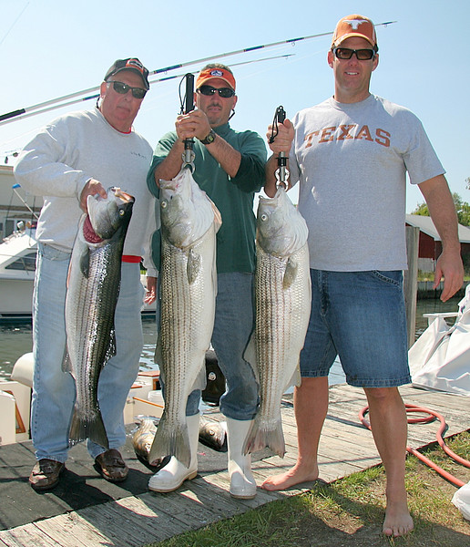 We have Rich Sr., Mike and Rich Jr. left to right with nice bass all in the 20's up to 27 pounds.<br /> <br /> It was a little tough today.  We had wind against tide in the morning and it blew pretty good.  The bluefish were all over the baits and we must have gone through 60 pieces by the end of the day.<br /> <br /> In the afternoon it got pretty nice and that's when we got the bigger fish.<br /> <br /> Another good day on the water with good people.<br /> <br /> Captain Al Lorenzetti