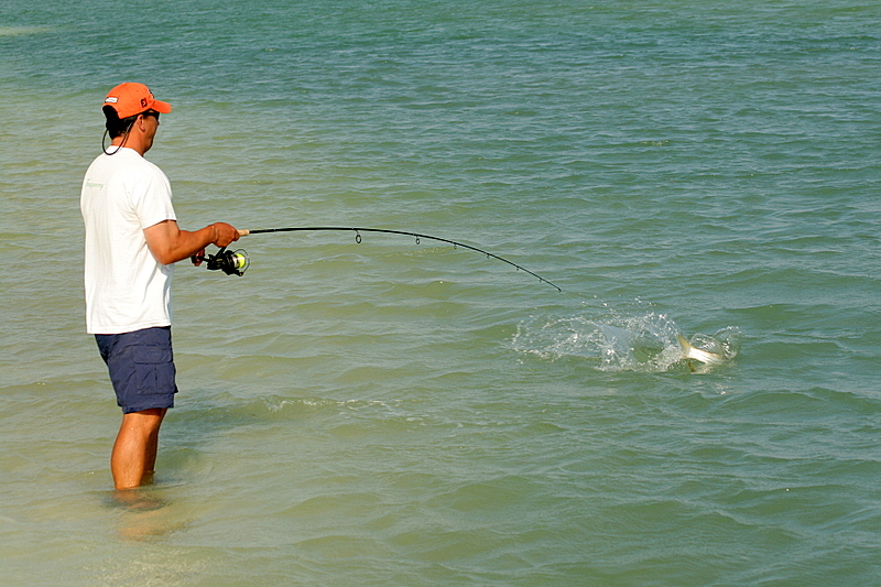 This fish was giving him a tough time.  When he came close to shore he stripped of line again heading for the deep water.