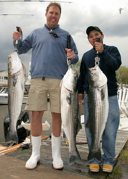 """5/19/2008<br /> <br /> I fished today with Fred McKibben of """"Grace Bar and Restaurant"""" in lower Manhattan and his head chef Julien. <br /> <br /> We had a good day of fishing under tough conditions. We boated a few nice fish before the wind came up and had lots of action and some missed fish. When the wind started to blow 35 it got tough. We had some pick ups but conditions were very difficult for setting up on the fish.<br /> <br /> As always with Fred and Julien, lunch was great. A pasta salad that can't be beat. Thanks guys.<br /> <br /> Another excellent day on the water with great guys.<br /> <br /> Captain Al Lorenzetti"""