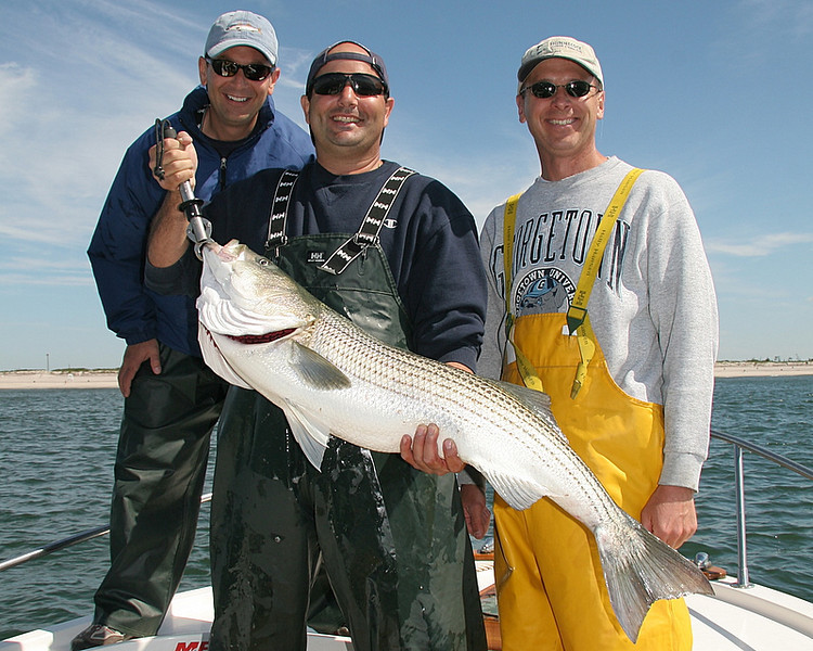 6/11/2008<br /> <br /> Great day of fishing today with Steve Rogers, Chris D'Agostino and Jim Dubrowsky (left to right).<br /> <br /> We beat on the fish catching at least a dozen up to 45 pounds.<br /> <br /> The big fish are finally here about 3 weeks late. A 63 pounder was caught yesterday. I am sure there are bigger ones around. The next few weeks should be fun