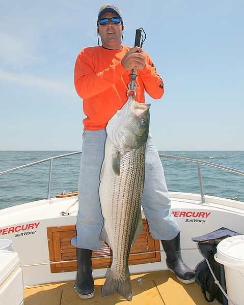 6/13/2008<br /> <br /> This was a great day of striped bass fishing with a bunch of old friends. <br /> <br /> I fished with Wells Newell, Bobby Kerr and Dan Priest out of Fair Harbor.<br /> <br /> We boated about 12 fish up to an amazing 52 pounds also with 42, 38, 34 and 32 pound fish and a bunch of 20's.<br /> <br /> Here is Bobby with his beautiful 38 pound fish.