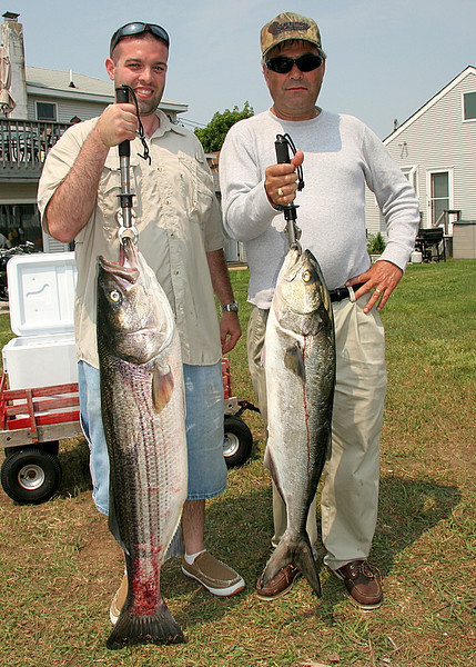 6/14/2008<br /> <br /> I fished today with Tony Acocella and his buddy Amadou. We fished  bunker in the ocean.<br /> <br /> We had a good day but fishing was tough with all the boat traffic. Too many boats on the pods and a lot of bluefish that invaded the area since yesterday. It was tough to hook up with a bass but we got one of 35 pounds and some huge bluefish. Tony's bass had its tail rubbed red from something and I guess that it was living on some wreck for a while.  I have often seen fish banged up like that when I catch them on wrecks however this one was caught in open water. Also, his fish was long and skinny weighing 35 pounds but 44 inches long. If it had a belly it would have been well over 40 pounds.<br /> <br /> We also dropped a bunch of fish today, probably about six or eight. Just some bad luck with the fishing but that's how it goes sometimes.<br /> <br /> It was a good day on the water and we had fun.<br /> <br /> Captain Al Lorenzetti