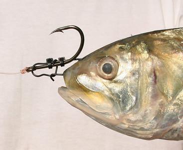 Fishing Reports 2009