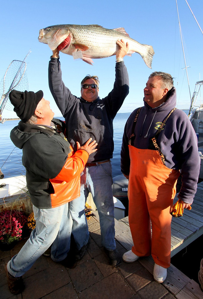 """11/2/2010   Billy  Connaughton with the first place Bass weighing in at 33.5 pounds. The fish was caught in the ocean east of the inlet. Slow jigging was the key to their success. Billy fished on Ray Bartlett's 22' Boston Whaler along with Brian Romeyk.  <a href=""""http://skimmer.smugmug.com/Fishing-Tournaments/Riverview-2010/14492813_E5XEb#1076086577_3QW7V"""">Click Here to view all the images</a>"""