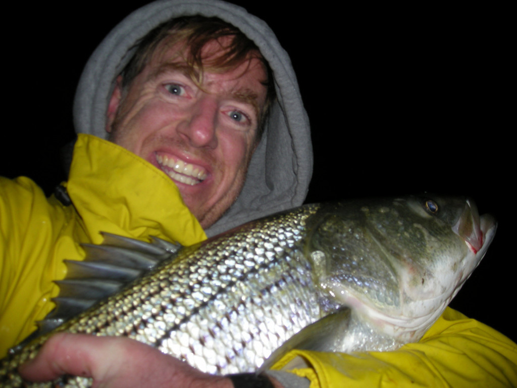 I only catch and release if you want to know.  This fish was released by Peter Holsinger in Moriches on October 19th.  I know it does not show going in water, but I fish alone so I have only 2 hands to hold and take pic, she was cradled in my arms since she was around 15, then I slid her out in the water.