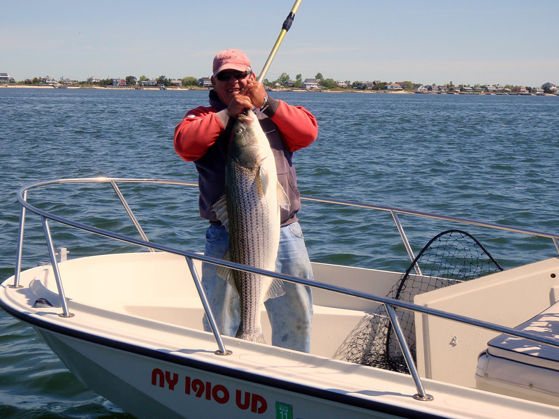 5/7/2010<br /> <br /> I fished a short day today in the back bay but it was not nearly as good as Wednesday. I had a couple of small bass on plugs and did some exploring.<br /> <br /> The big news it that today the big fish arrived. Here is my buddy RB otherwise known as Ray Bartlett of the UPS Store in Babylon.<br /> <br /> He is holding a beautiful 35.5 pound striped bass caught today on live bait. Notice the gaff supporting the fish. Not like the last time we tried this and the fish slipped out of his hand and into the water and would have been a tournament prize winner. Nice move Ray!<br /> <br /> Ray also had a couple of other fish in the mid twenties.<br /> <br /> And by the way the work he did on his boat looks great. Neat and clean with all new electronics and wires that don't spark when you are running.<br /> <br /> Congratulations Ray on the first big fish taken in the Fire Island area!!!<br /> <br /> Another great day on the water.<br /> <br /> Captain Al Lorenzetti