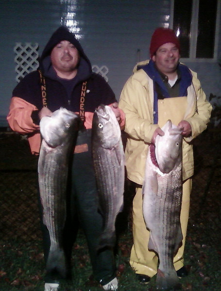 10/24/2009<br /> <br /> Ken Tronti and Tom (the machine) Goettelmann fished hard in the rain Saturday night and scored with 5 Bass to 39 pounds. The bass were caught in the inlet area on the ebb tide on Eels.