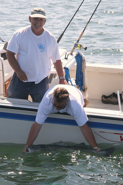 Another fish being released by this crew. This one was about 40 pounds.