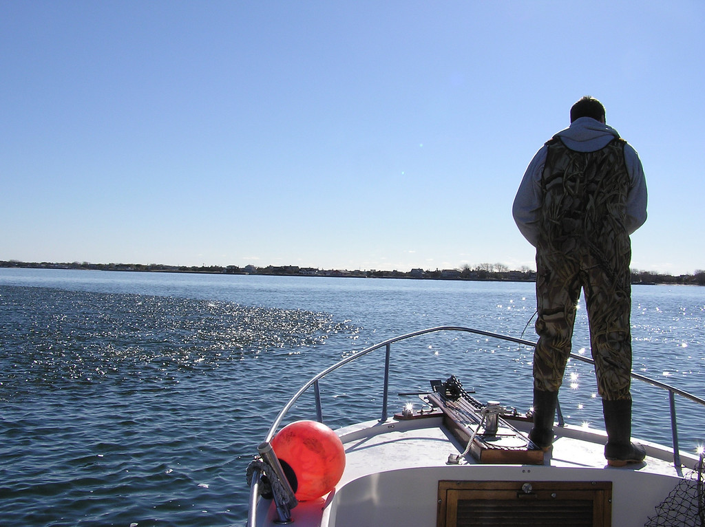 When snagging bunker to use for bait for striped bass, don't be in a big hurry to bring the snagged bait into the boat.  The bass are often right in the pod of bait trying to find a wounded or slow moving bunker.  Snag the bait and let it swim with the school.  Your snagged piece of bait will behave differently than the rest of the school and stand out as being wounded.  It will be a real target for a big striped bass that is lurking beneath the school of bait.  Let the big bass eat your bait and the snag hook and hang on for dear life and the fight of your life.  This is John Dall working a school of bunker by swimming a live one in the pod.