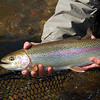 Typical catch: 23-inch wild rainbow.