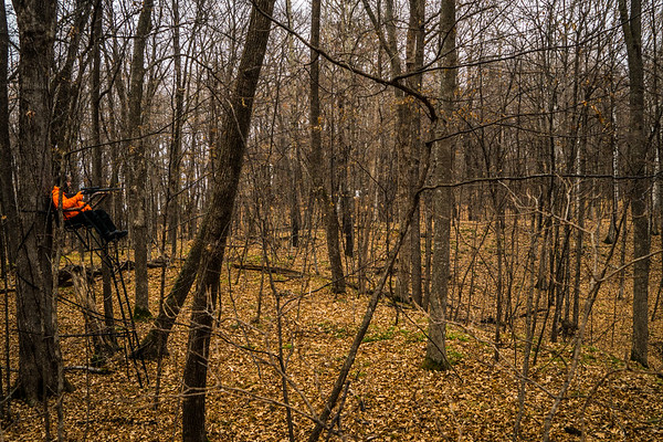Can you see the deer? - Hint lower right