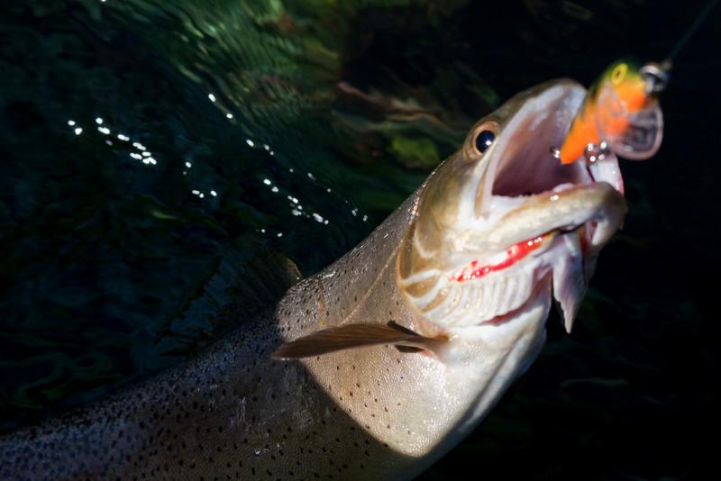 trout.jpg-9