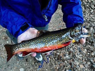 Fishing in the Sierra