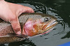 Snapshot gallery of images from a fly fishing trip to Lake Lenore in central Washington State.  Images have been batch processed for display on the web. Image Copyright © 2005 J. Andrew Towell All Rights Reserved. Please contact the copyright holder at troutstreaming@gmail.com to discuss any and all usage rights.
