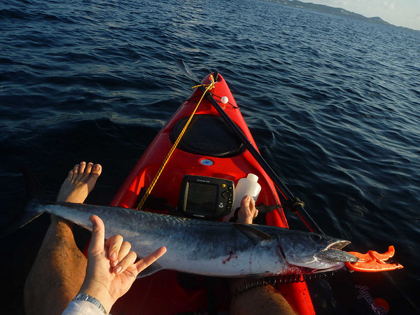 Shaka! 17# king mackerel caught after taking me on a 'Grenadian sleigh ride' in October 2010. My second largest kayak catch to date.