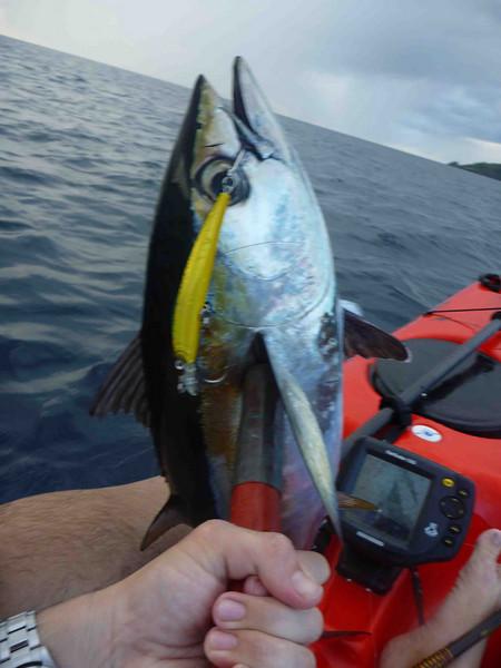 12# blackfin tuna, crystal minnow<br /> May 1