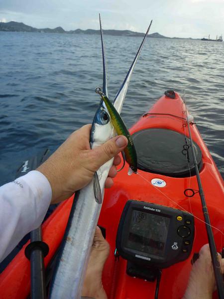 May 1 <br /> Aha (needlefish)<br /> Released