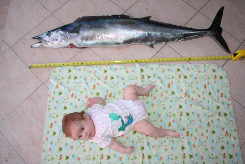 This picture kind of makes me embarrassed about the last Darwin/fish picture. This guy would happily EAT the smaller of the tuna in that picture.