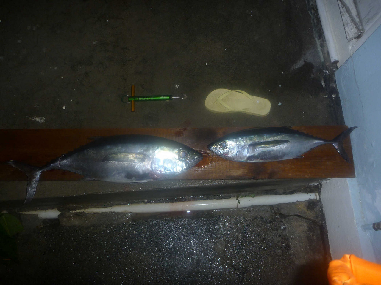 February 9<br /> Both fish I caught this day, 8.5 & 4 pounds. Both are blackfin tuna.