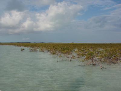 Andros Mangrove flats