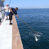 Rene gaffing a fish for Erik Johnson
