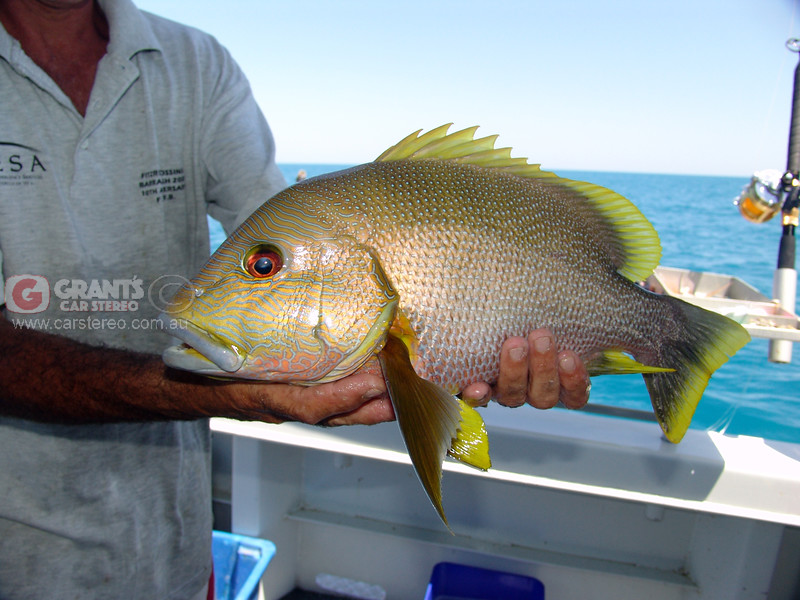 Nature has a way of creating some magnificent creatures. Here is a another example caught on the Rare Breed fishing charter out of Broome.