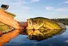 Fishing, largemouth bass fishing