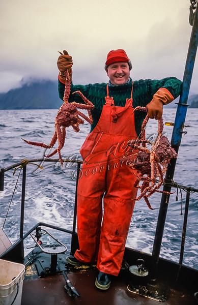 Fishing, catching king crabs