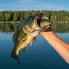 Fishing, bass fishing