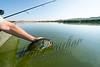 Fishing, bass fishing, summer
