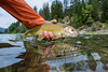 Fishing, fly fishing for whitefish