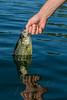 Fishing, fly fishing for pan fish, crappie fishing