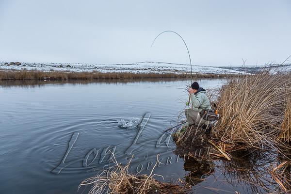 Fly fsihing, winter fly fishing