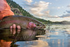 Fishing, fly fishing for trout,  red band rainbow trout