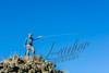 Fishing, fly fishing, rainbow trout, stream fishing