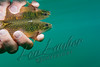 Fishing, fly fishing for trout,  brook trout fishing