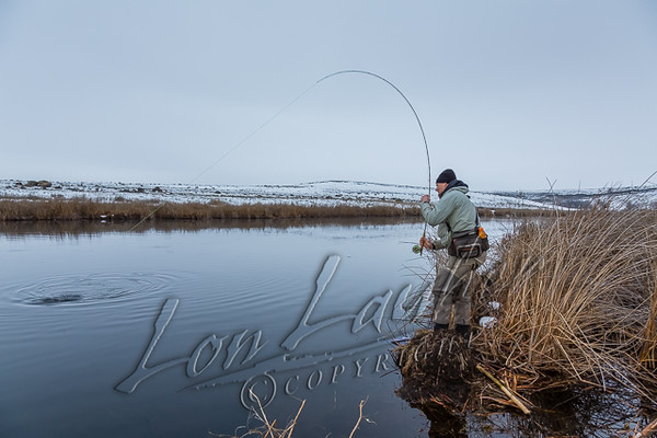 Fly fsihing, winter fly fishing