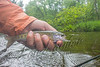 Fishing, Fly Fishing, Pere Marquette River, MI