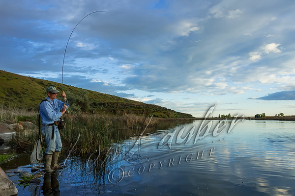 Fishing, fly fishing for rainbow trout